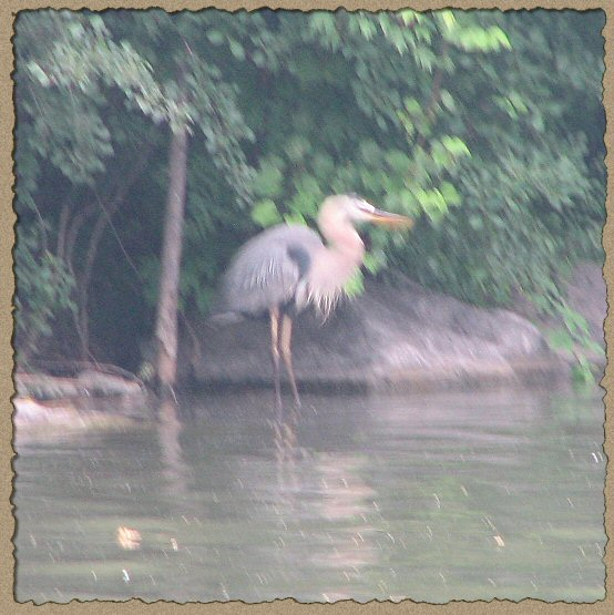 Blurry photo of a heron